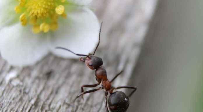 Formiche in casa cause e rimedi naturali - Formiche in casa ...