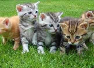 Cuccioli di gatti su un prato