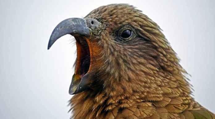 uccello che canta