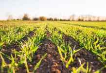 Campo di agricoltura